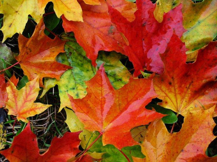 Comment profiter des plaisirs de l'automne?
