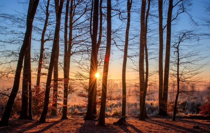 Forêt arbre lumière
