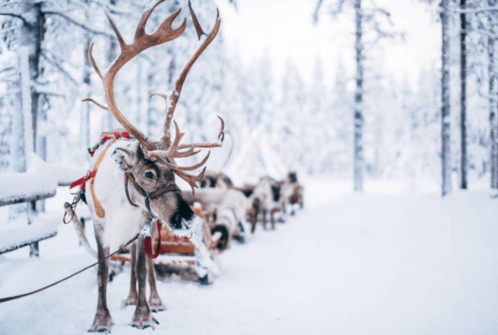 Passez un Noël authentique enLaponie