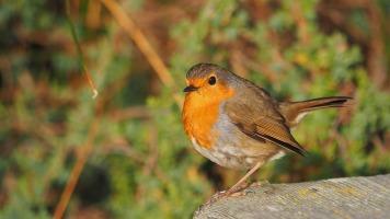 Un oiseau à contempler