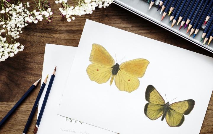 Dessin de papillons