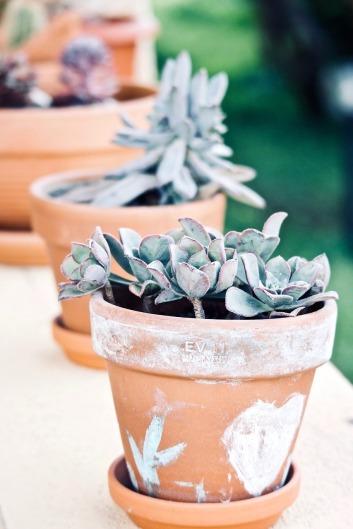 jardinage plantes