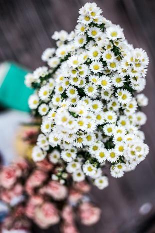 Marguerite printemps