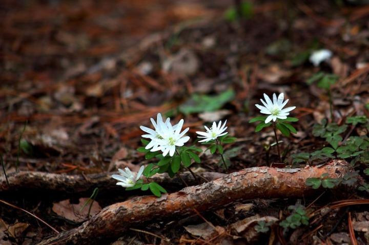 Fleurs dans la forêt
