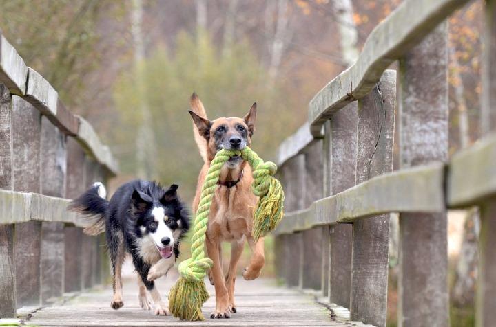 chiens interctions sociales