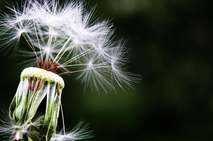Pollens