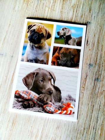 Carte avec les chiens