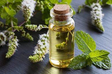 menthe poivree huiles essentielles