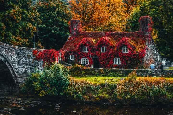 automne feuilles saison