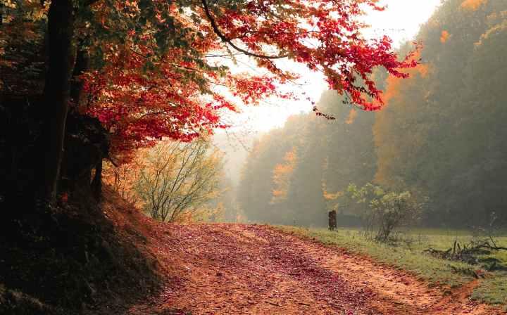 balade forêt feuilles