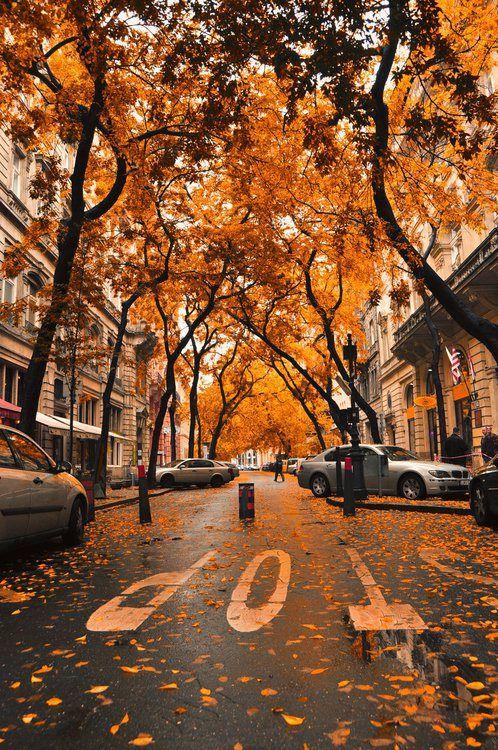 Automne arbres rue
