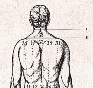 Dos corps humain
