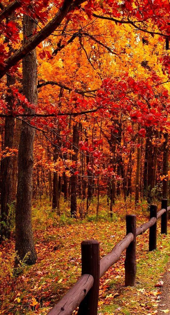 forêt en automne couleurs
