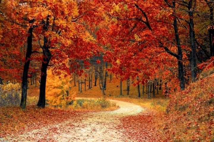 foret saison automne