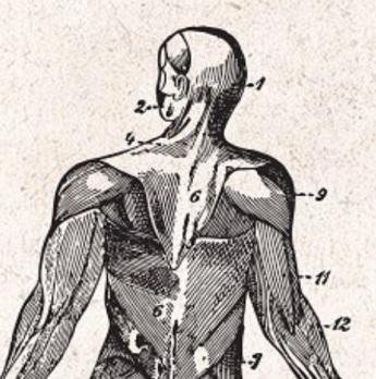 Mouvements du dos corps humain