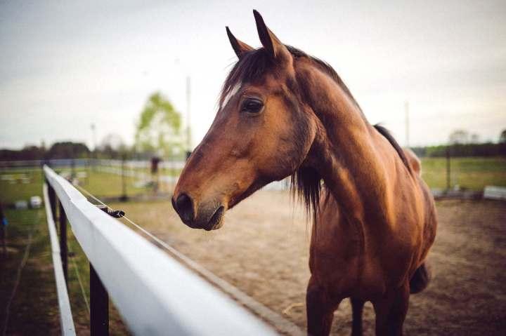 cheval brun balade