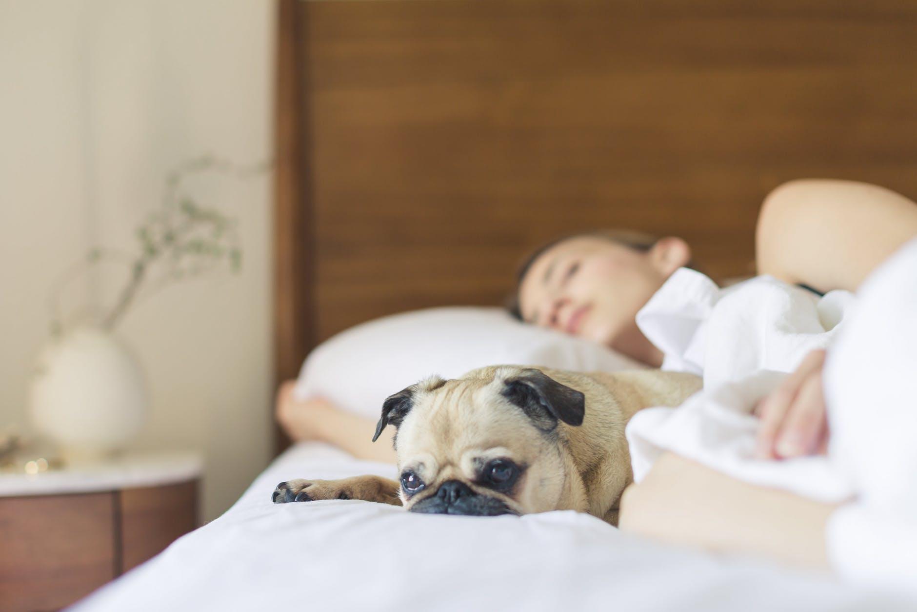 Retrouver le sommeil avec le bandeau Dreem
