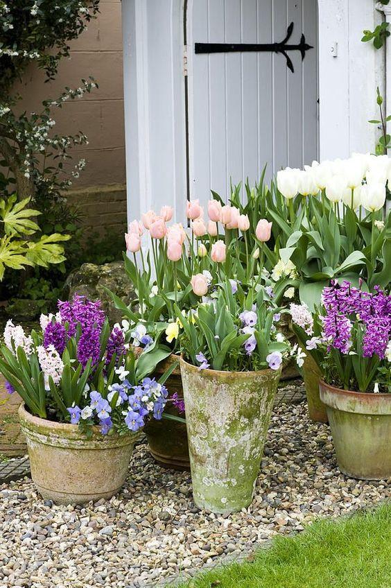 fleurs de printemps en pot