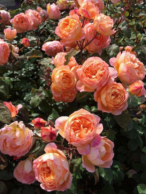 fleurs orangees idee jardin
