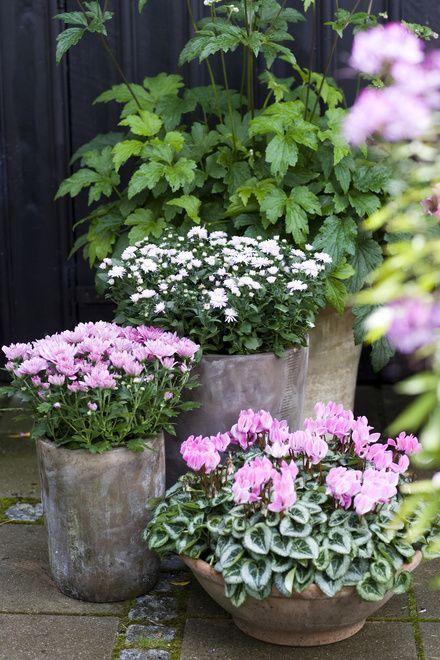 le printemps fleur en pot