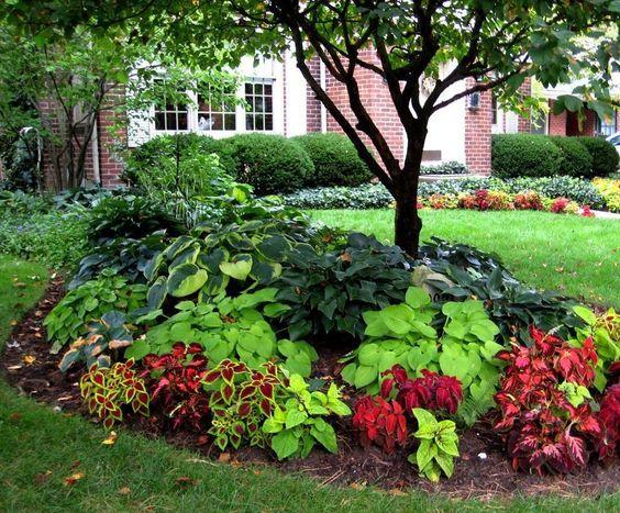 Parterre de fleurs ombragé