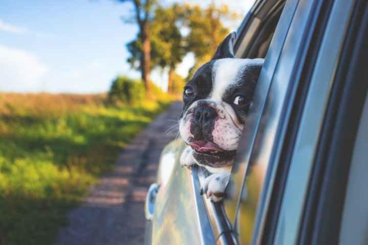 chien en voiture Mon Totem