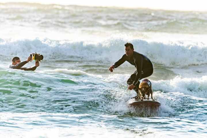 surf avec son chien