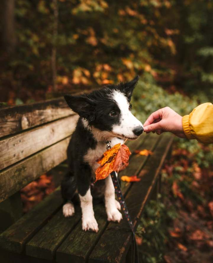 chien-promenade-automne