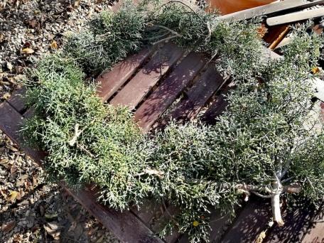 Les branches de sapin forment une couronne