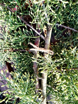 La ficelle maintient les deux branches