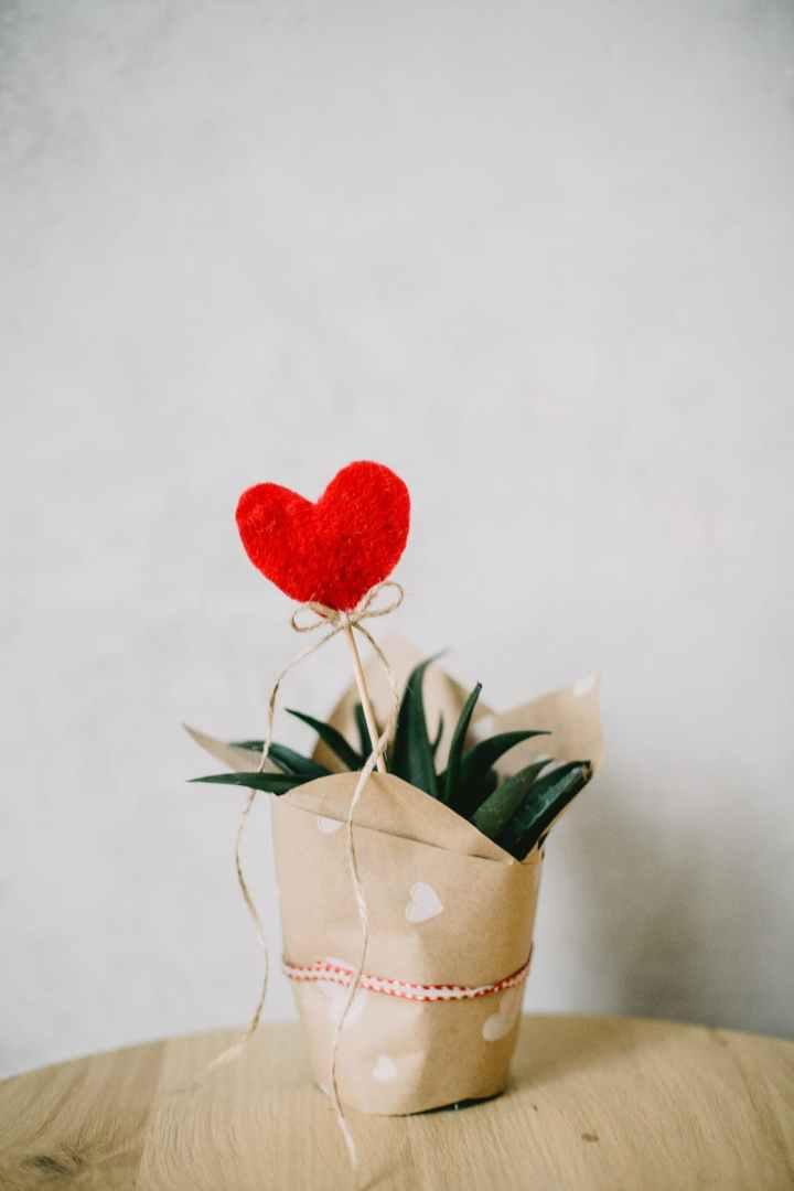 plante-coeur-saint-valentin